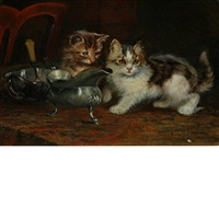 kittens on the table by wilson hepple
