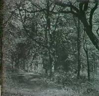 wood-scene norton cheshire by thomas (ph) davies