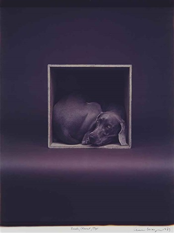backfronttop by william wegman