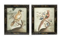a pair of 18th century hand-coloured basso relievo pictures of birds (after george edwards) (pair) by samuel dixon