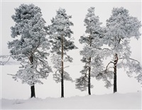 four trees, ferrapontou, russia by andrew moore