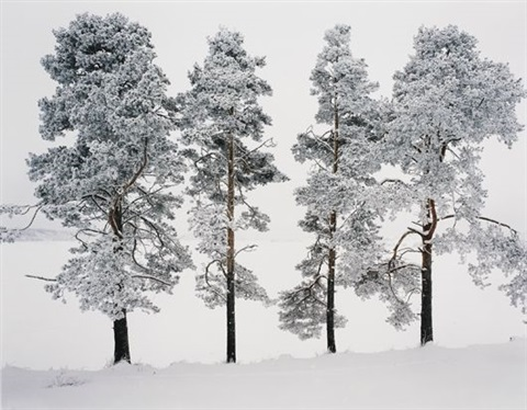 four trees ferrapontou russia by andrew moore