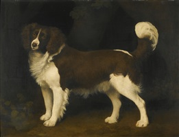 portrait of a dark brown and white newfoundland spaniel by george stubbs