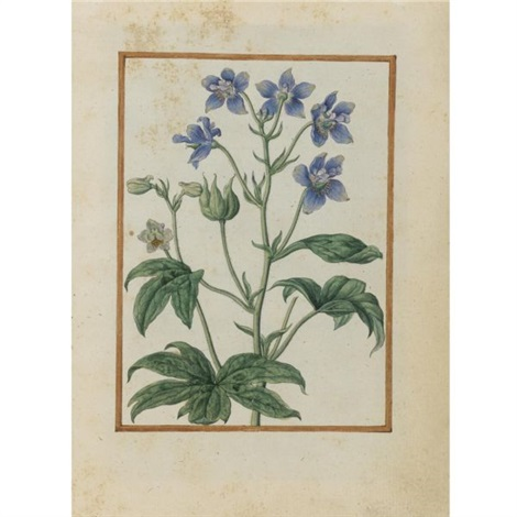staversacre delphinium staphisagria by jacques le moyne de morgues