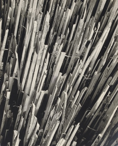 wood pickets before by erhard dorner