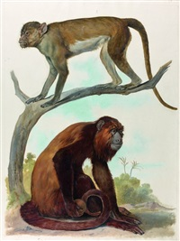 deux études de singes by august von pelzeln and franz steindachner