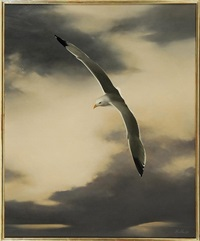 seabird #5 by anne macadam