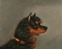 head of a norwich terrier by edwin (of bath) loder