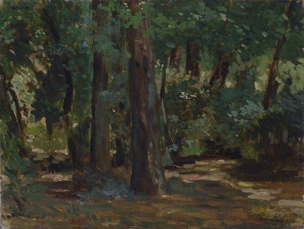 sole tra gli alberi alle cascine by giovanni fattori