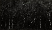 new hampshire by harry callahan