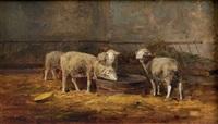 agneaux à l'abreuvoir by andré cortes