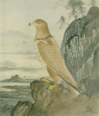a young eagle found near margam by william weston young