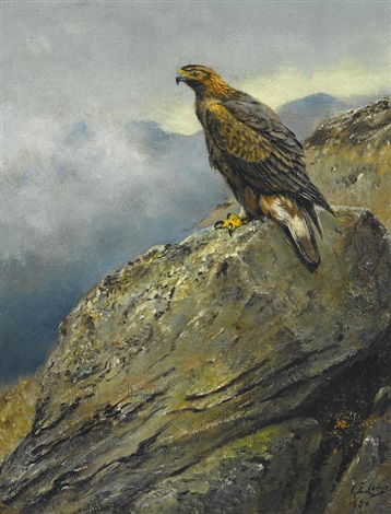 a golden eagle perched on a rock by george edward lodge on artnet