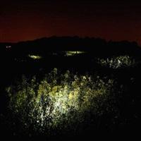 lumières dans la nuit n°2 by marthe lemelle