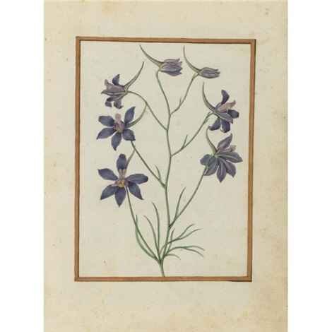 larkspur by jacques le moyne de morgues