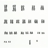 untitled, chromosome drawing no. 13 (+ solved problem no. 71; 2 works) by jon tower