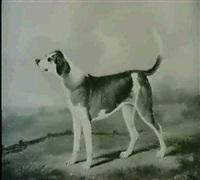 portrait of wily, a fox hound in a park landscape by edmund aylburton willis