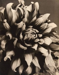 chrysanthemum by vladimir fyman