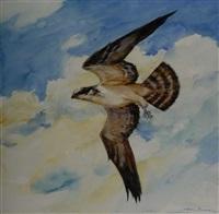 soaring osprey by john swan