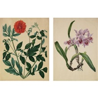 flowers (12 studies) by austrian school-vienna (19)