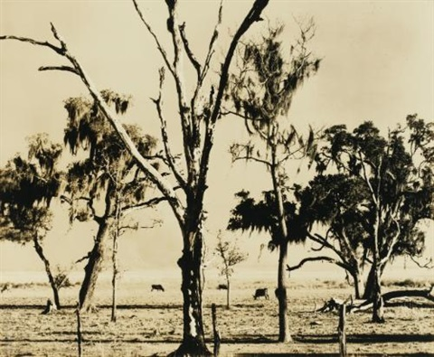landscape louisiana by walker evans