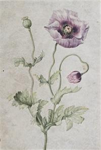 anemone by johanna helena graff