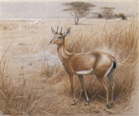 an oribi by david morrison reid henry