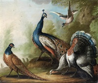 a peacock, pheasant, turkey and jay by a river by marmaduke cradock