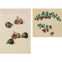 fruit (12 studies) by austrian school-vienna (19)