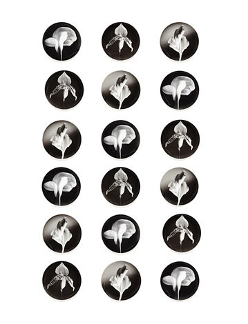flower, orchid and calla lily plates (set of 18) by robert mapplethorpe