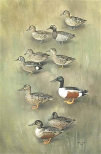 garganey ducks, blue-winged teals and northern shovelers by peter markham scott
