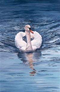 breaking the waves - mute swan by peter bainbridge