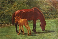 kuda by omar yahya