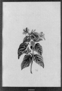 pflanzenstudie by jean-joseph reichlen
