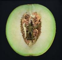 melon territory by angki purbandono