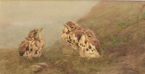 fledgling birds by harry allen