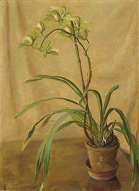 green cymbidium by isabel codrington