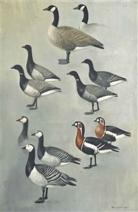 canada, brent, red-breasted, and barnacle geese by peter markham scott