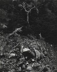 Edward Weston, Portrait of Carmelita Maracci, 1937