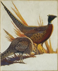 pheasant pair by francis lee jaques