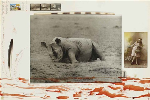 rhinoceros by peter beard