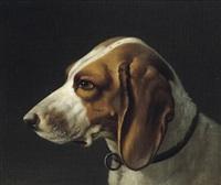 kopf eines vorstehhundes by wilhelm reinhardt