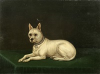 cribb, a white terrier by edwin (of bath) loder