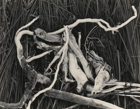 drift twigs mono lake by edward weston