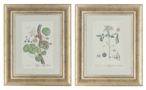 untitled 9 others 10 works from a curious herbal series by elizabeth blackwell