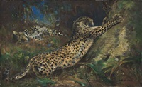 contentment - leopards by cuthbert edmund swan