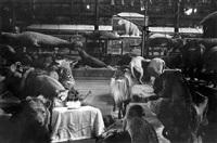 anniversaire des animaux (from the la salle des souvenirs series) by gladys