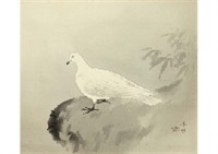 pigeon by kibo kodama