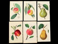 peaches, apples, pears (group of 6 works) by john lindley