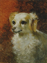hundeportrait by oliver pichat